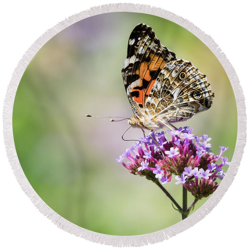 Animal Round Beach Towel featuring the photograph Painted Lady by Abeselom Zerit