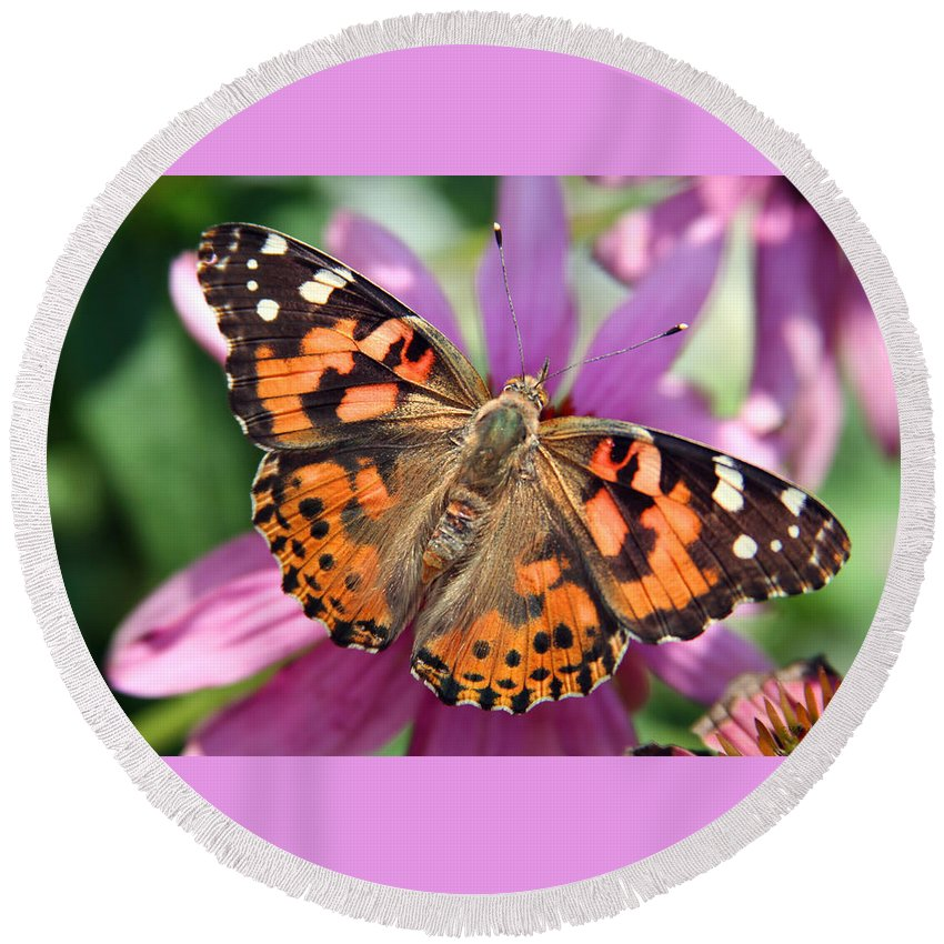 Painted Lady Round Beach Towel featuring the photograph Painted Lady Butterfly by Margie Wildblood