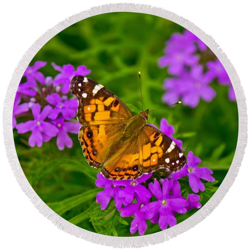 Michael Tidwell Photography Round Beach Towel featuring the photograph Painted Lady On Purple Verbena by Michael Tidwell