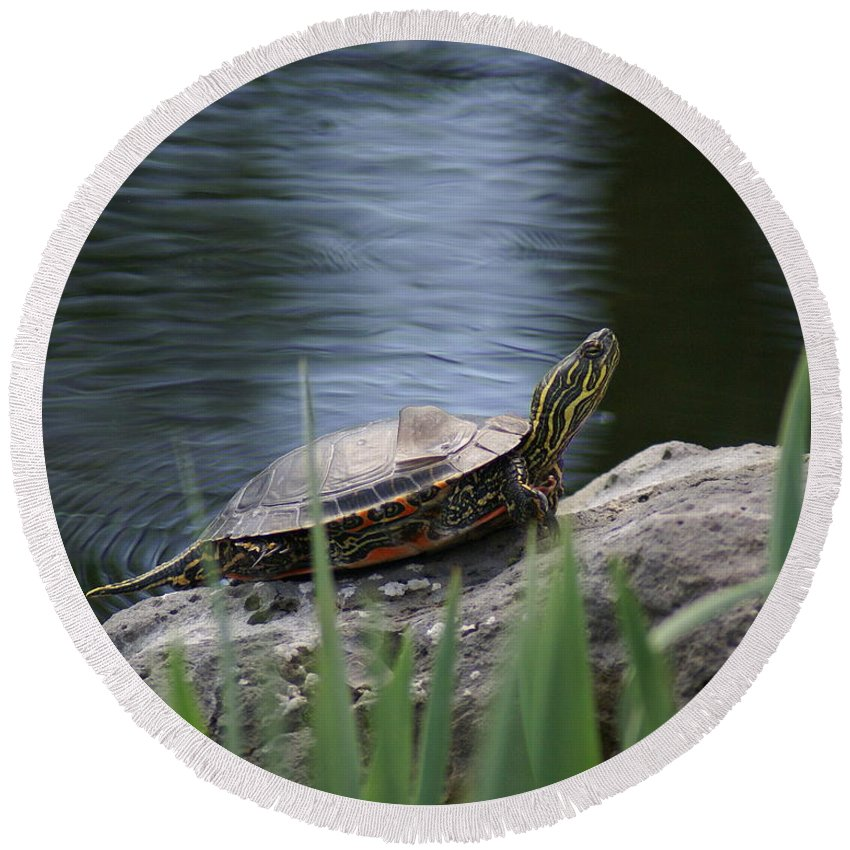 Spokane Round Beach Towel featuring the photograph Painted Turtle by Ben Upham III