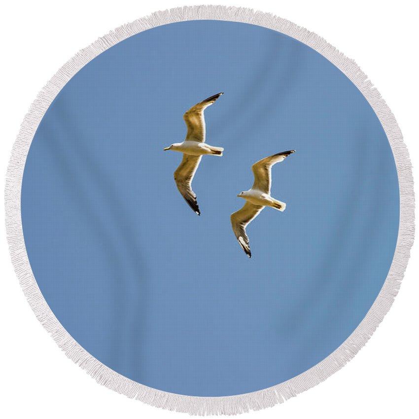 Burgazada Island Round Beach Towel featuring the photograph Pair Of Herring Gulls by Bob Phillips