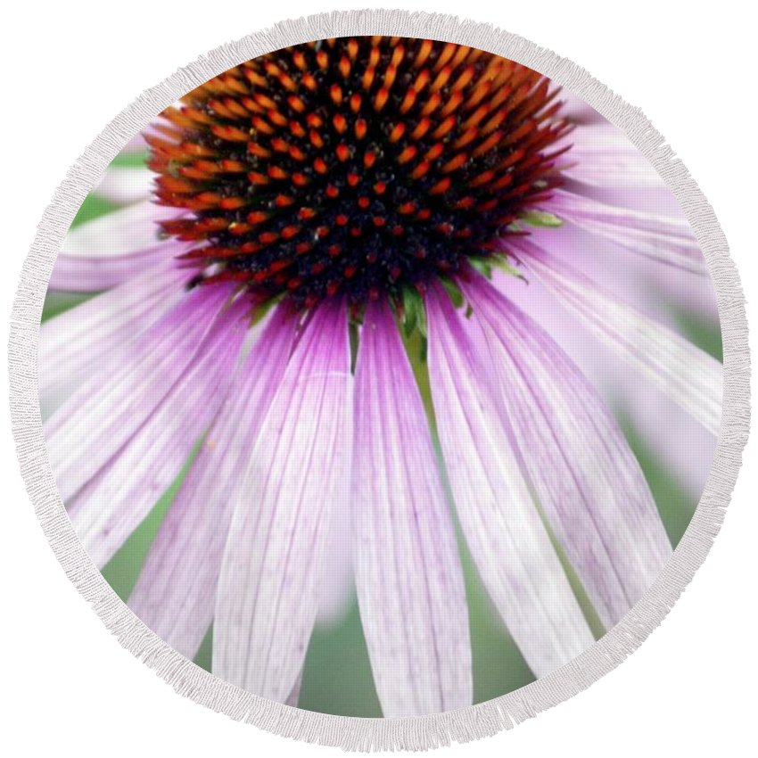 Flowers Round Beach Towel featuring the photograph Pale Grey by Marty Koch