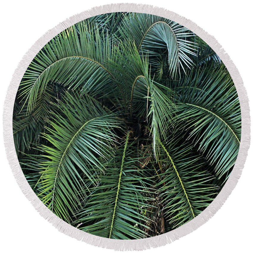 Palm Round Beach Towel featuring the photograph Palm Fronds by Kristin Elmquist