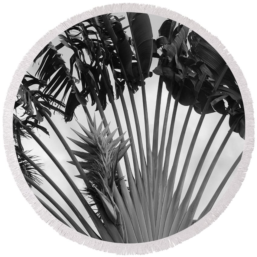 Macro Round Beach Towel featuring the photograph Palm Frons by Rob Hans