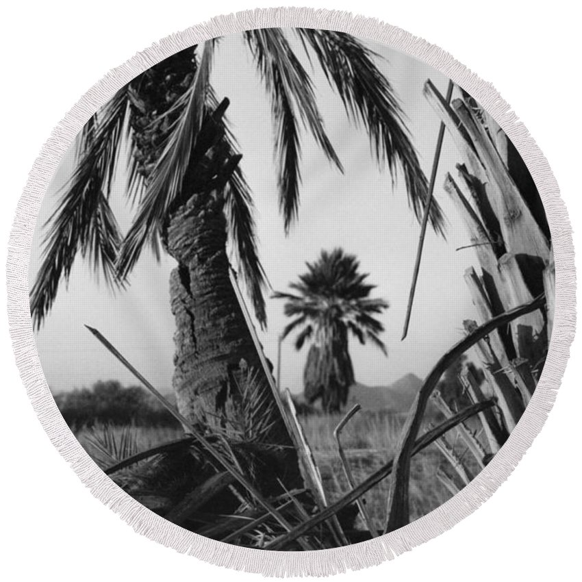 Black And White Photograpy Round Beach Towel featuring the photograph Palm In View Bw Horizontal by Heather Kirk