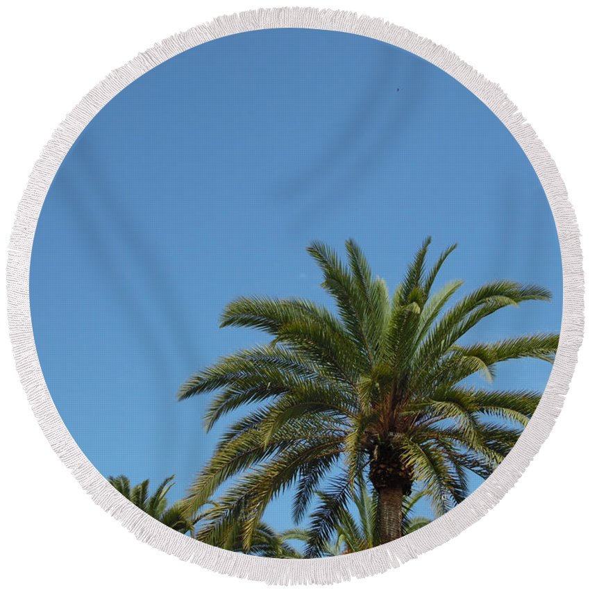 Palm Trees Round Beach Towel featuring the photograph Palm Sky by Chad Kroll