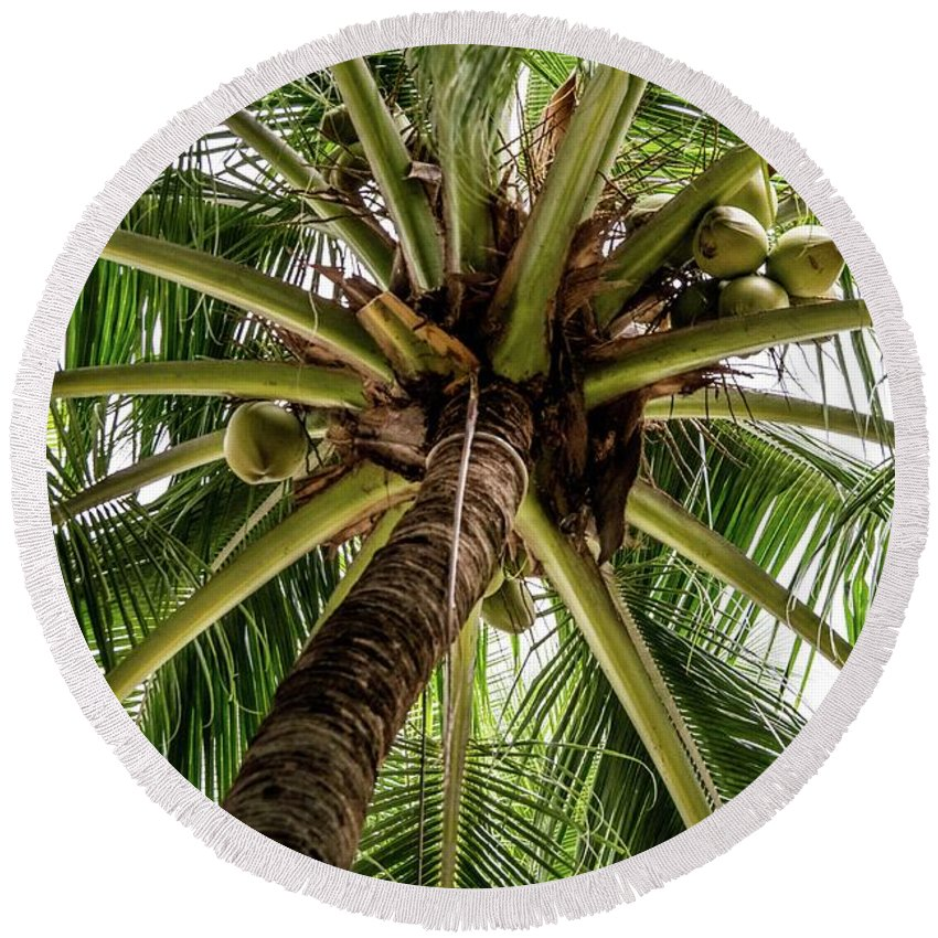 Palm Round Beach Towel featuring the photograph Palm Tree by David Rolt