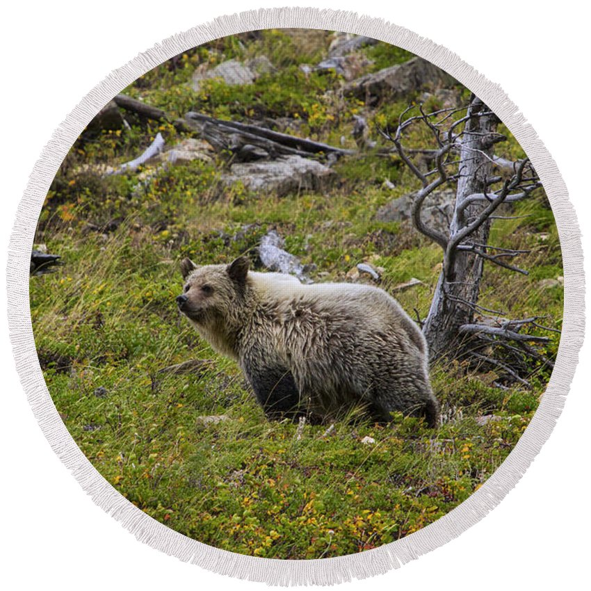 Autumn Round Beach Towel featuring the photograph Panda In Many Glacier by Mark Kiver
