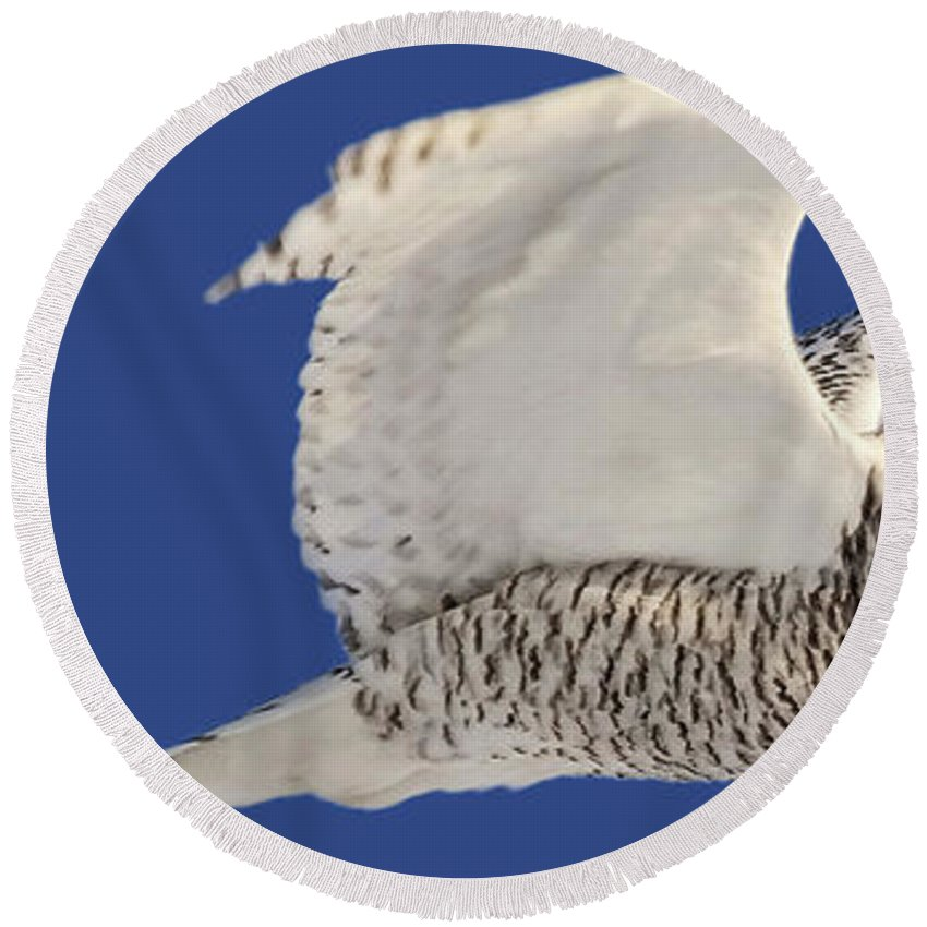 Round Beach Towel featuring the digital art Panoramic Prairie Snowy Owl by Mark Duffy