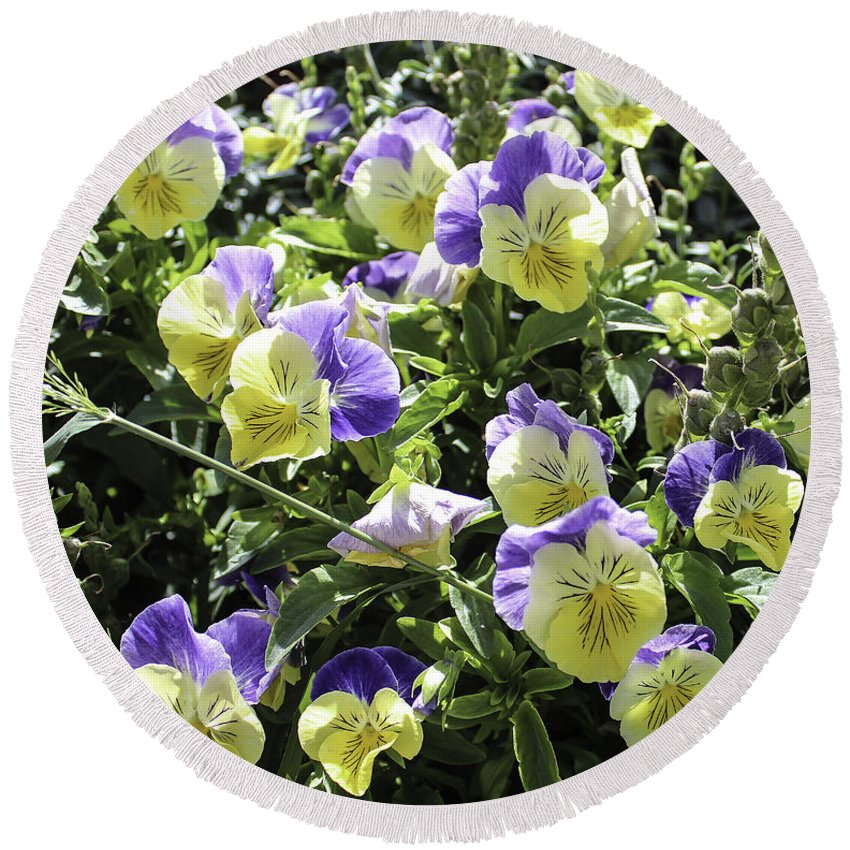 Pansies Round Beach Towel featuring the photograph Pansies by Lorraine Baum