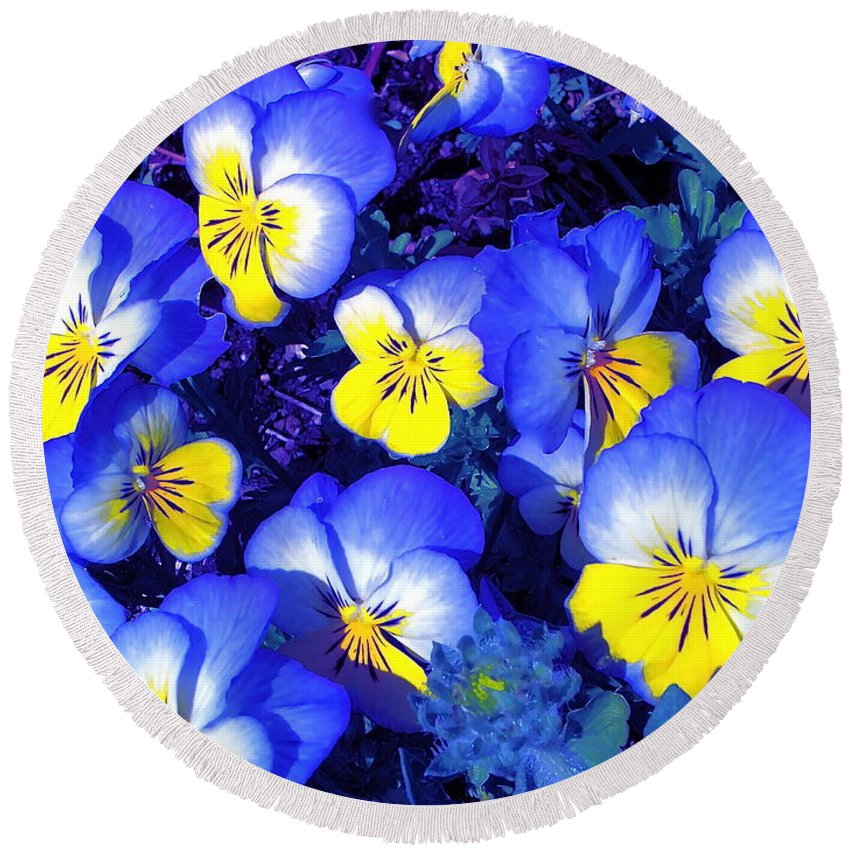 Flowers Round Beach Towel featuring the photograph Pansy 3 by Pamela Cooper