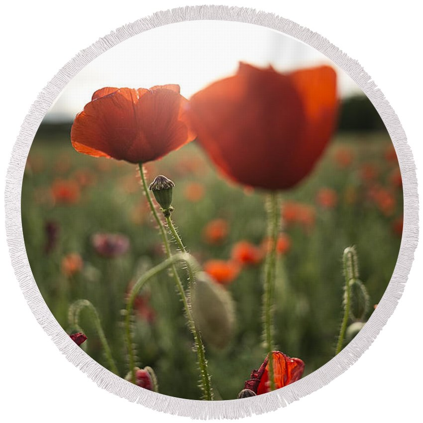 Poppies Round Beach Towel featuring the photograph Papaver Rhoeas by David Ortega Baglietto