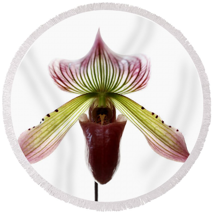 Orchid Round Beach Towel featuring the photograph Paphiopedilum Lawrenceanum by Marilyn Hunt