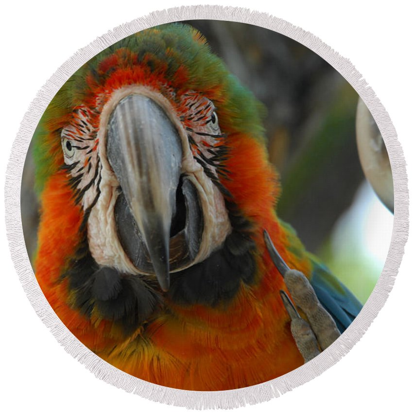 Parrot Round Beach Towel featuring the photograph Parroting Information by Donna Blackhall