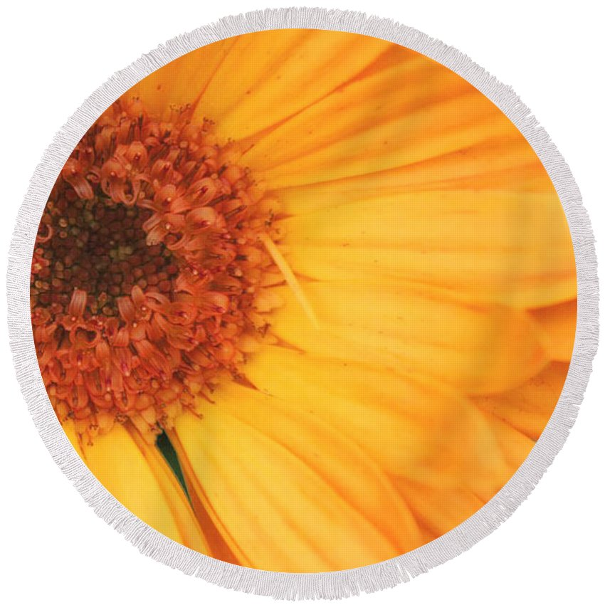 Flowers Round Beach Towel featuring the photograph Partly Sunny by Linda Sannuti