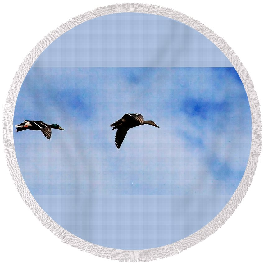 Digital Photography Round Beach Towel featuring the photograph Partners by David Lane