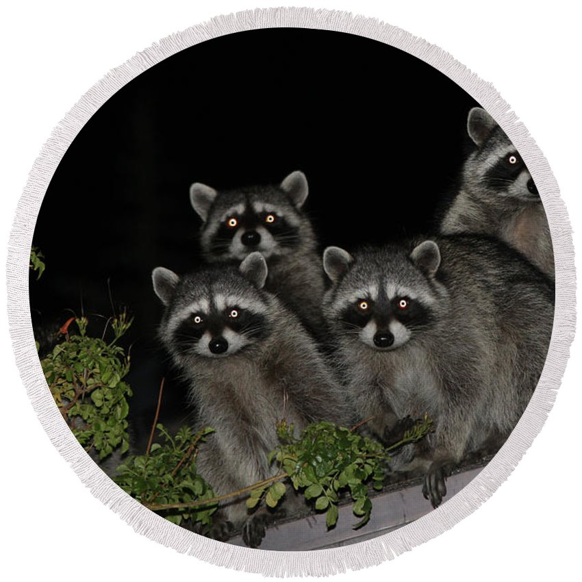Nature Round Beach Towel featuring the photograph Party Of Five On The Roof Top by Nina Prommer