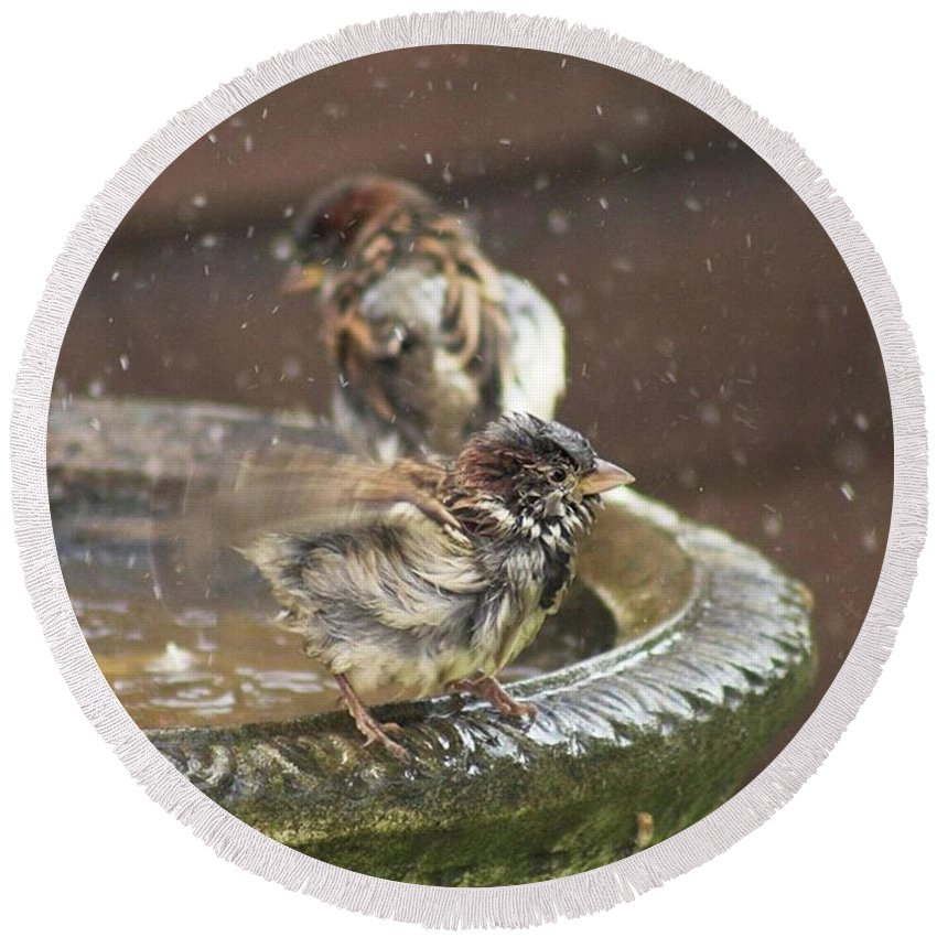 Nature Round Beach Towel featuring the photograph Pass The Towel Please: A House Sparrow by John Edwards