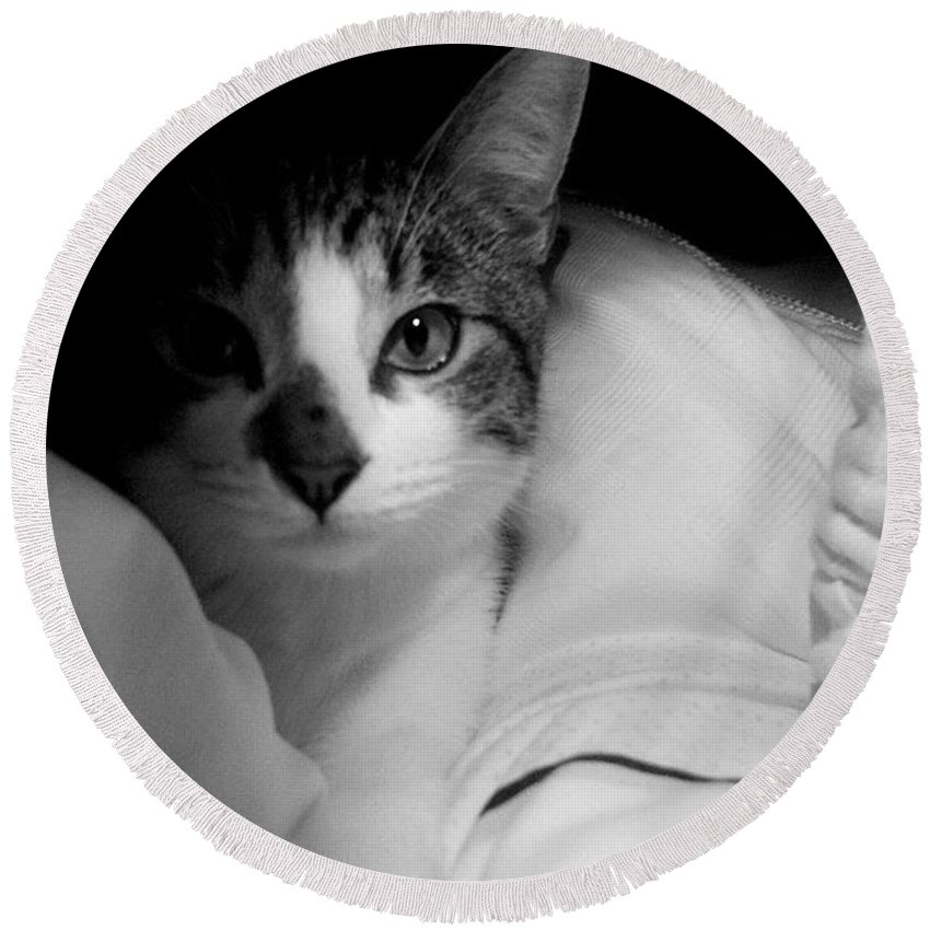Kitty Round Beach Towel featuring the photograph Patch Of Love by Pattie Frost