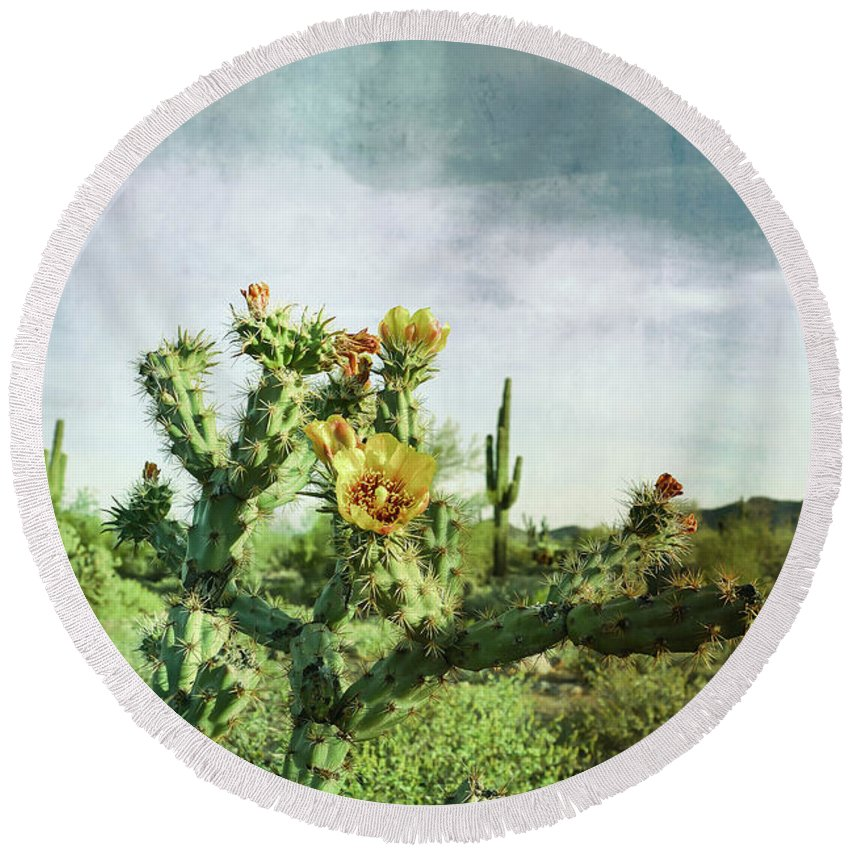 Cactus Round Beach Towel featuring the photograph Patina Green Desert Bloom by Aimee L Maher ALM GALLERY