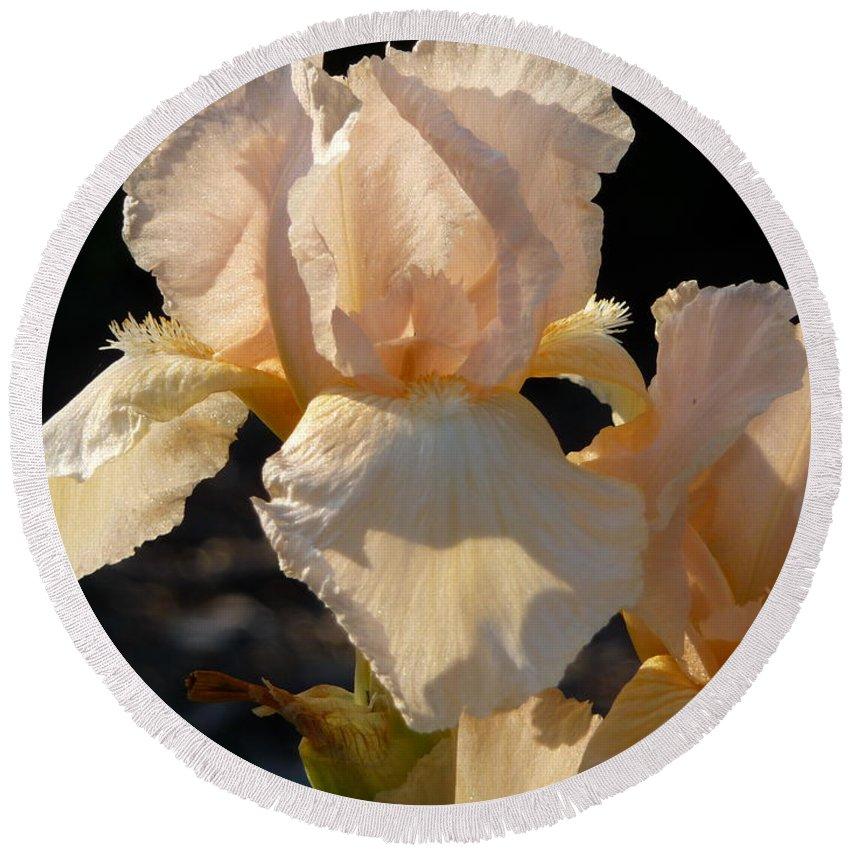 Flower. Iris Round Beach Towel featuring the photograph Peach Bearded Iris by Ruth Kamenev