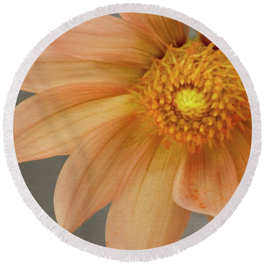 Floral Round Beach Towel featuring the photograph Peach Dahlia by Sharon Foster