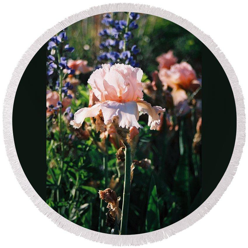 Flower Round Beach Towel featuring the photograph Peach Iris by Steve Karol