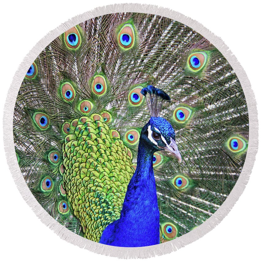 Peacock Round Beach Towel featuring the photograph Peacock Colors by Scott Mahon