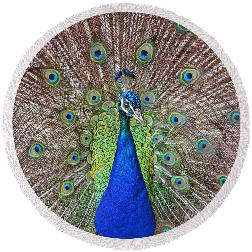 Peacock Round Beach Towel featuring the photograph Peacock Displaying His Plumage by Jim Fitzpatrick