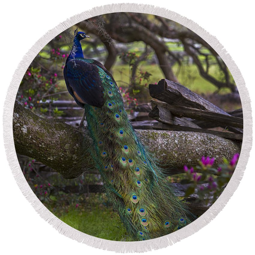 Landscape Round Beach Towel featuring the photograph Peacock On The Plantation by Jeff Shumaker