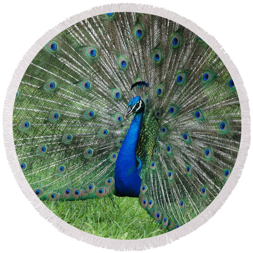 Peacock Round Beach Towel featuring the photograph Peacocks Glory by Rob Hans
