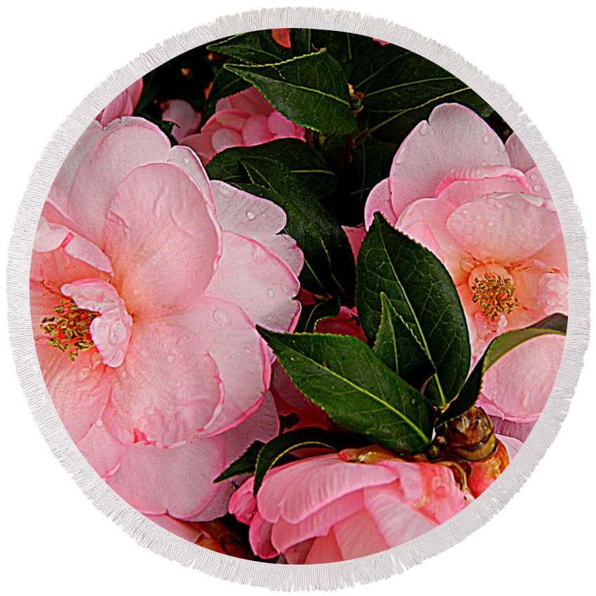 Flower Round Beach Towel featuring the photograph Peak Of Pink Perfection by Kathy Barney