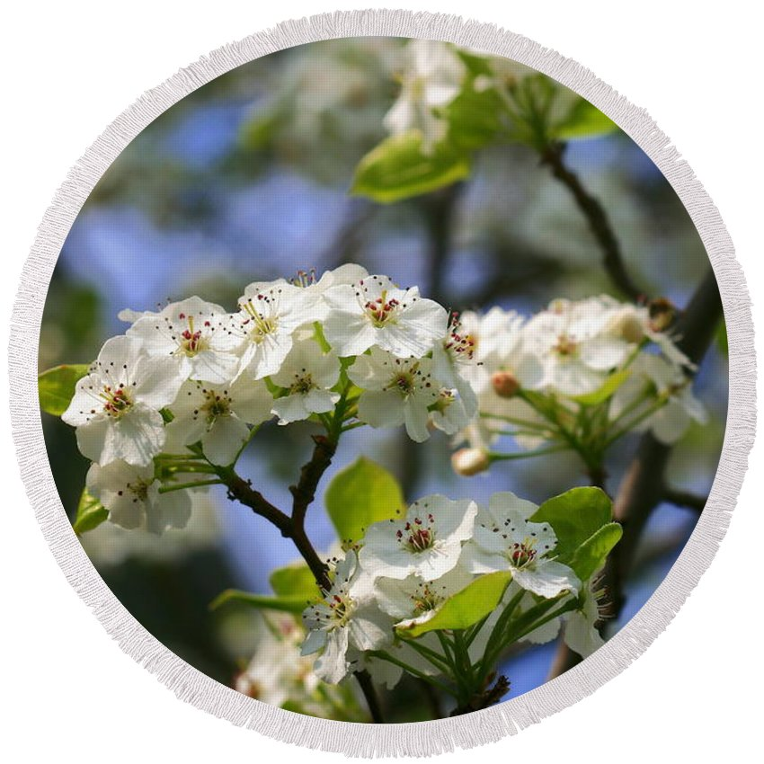 Pyrus Calleryana Round Beach Towel featuring the photograph Pear Tree Blossoms by Angela Rath