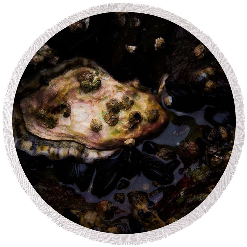 Barnacles Round Beach Towel featuring the photograph Pearl In The Making by Venetta Archer
