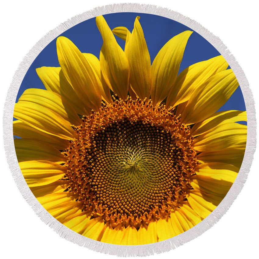 Sunflowers Round Beach Towel featuring the photograph Peek A Boo by Amanda Barcon