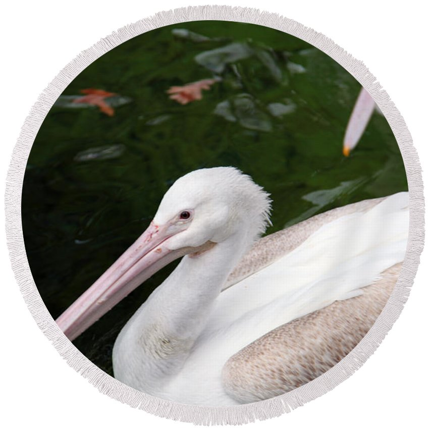 Pelican Round Beach Towel featuring the photograph Pelican by Amanda Barcon