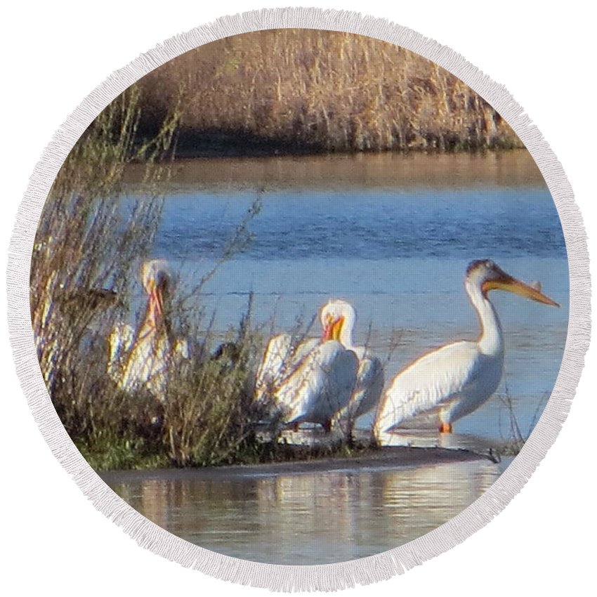 Pelicans Round Beach Towel featuring the photograph Pelican Beach by Hollie McIntire