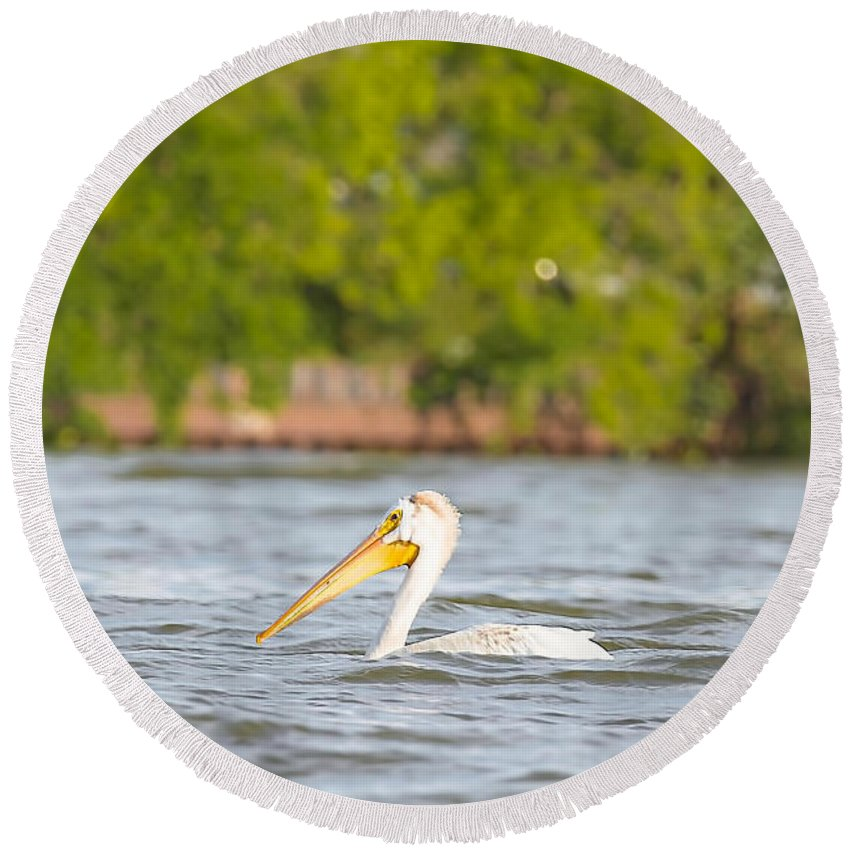 White Pelican Round Beach Towel featuring the photograph Pelican Drifting Along by Nikki Vig