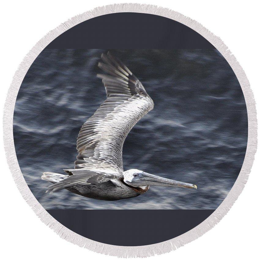 Pelican Round Beach Towel featuring the photograph Pelican Flight by Glenn Gordon
