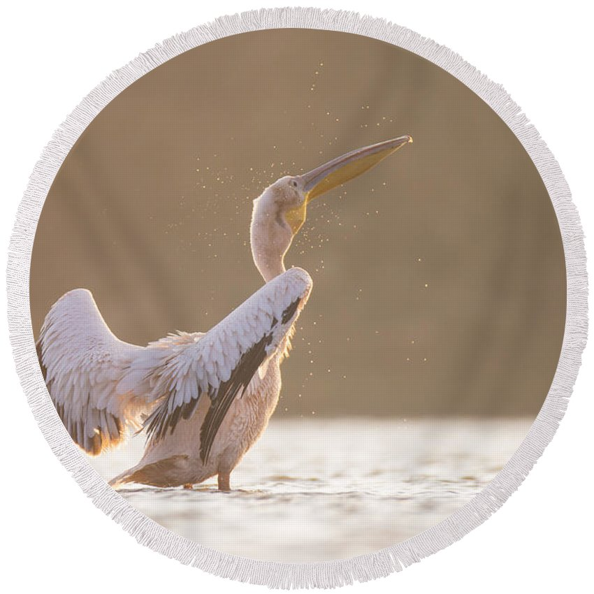 Pelican Round Beach Towel featuring the photograph Pelican In The Water by Alon Meir
