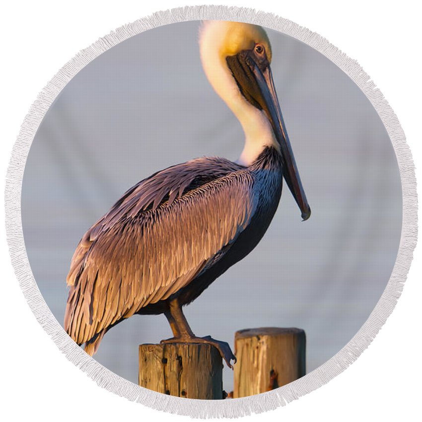 Pelican Round Beach Towel featuring the photograph Pelican Perch by Janet Fikar
