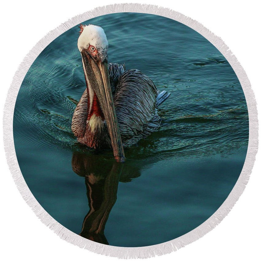 Pelican Round Beach Towel featuring the photograph Pelican Reflection by Tom Claud