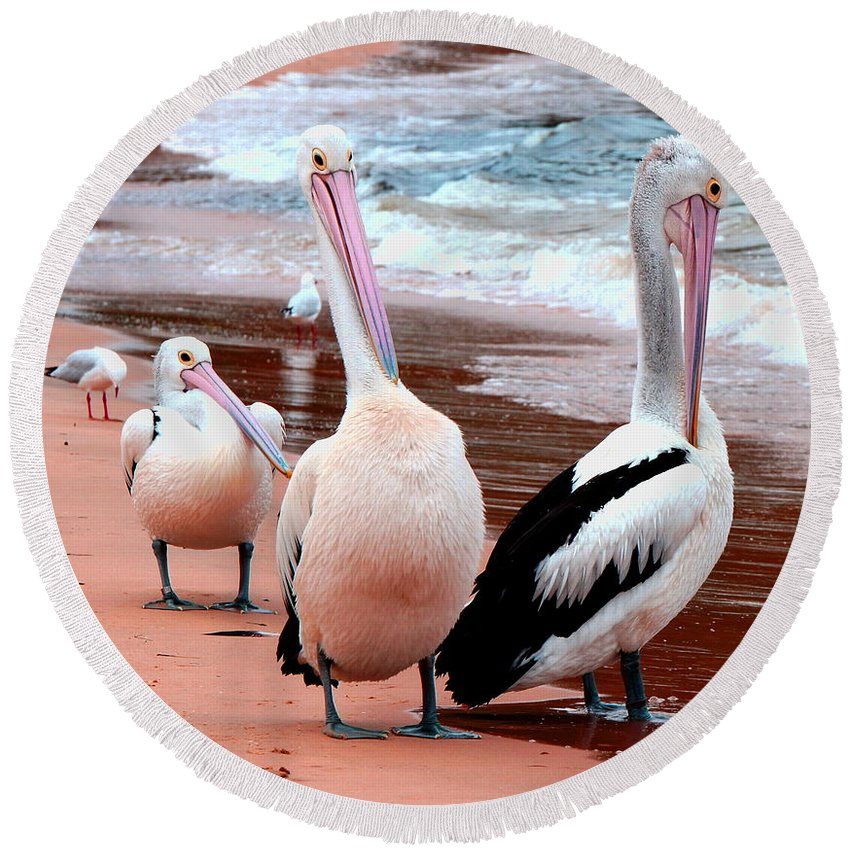 Pelecanidae Round Beach Towel featuring the photograph Pelicans At Pearl Beach 5.2 by Giro Tavitian