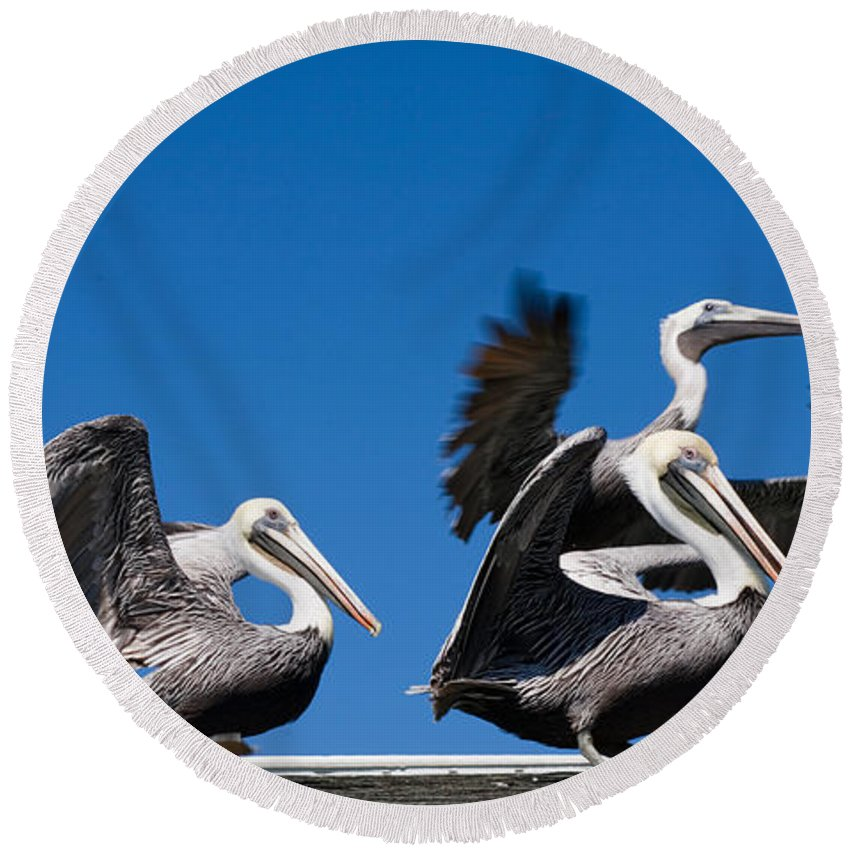 Pelicans Round Beach Towel featuring the photograph Pelicans Take Flight by Mal Bray