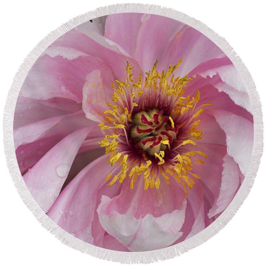 Flower Round Beach Towel featuring the photograph Peonie In Pink by Deborah Benoit