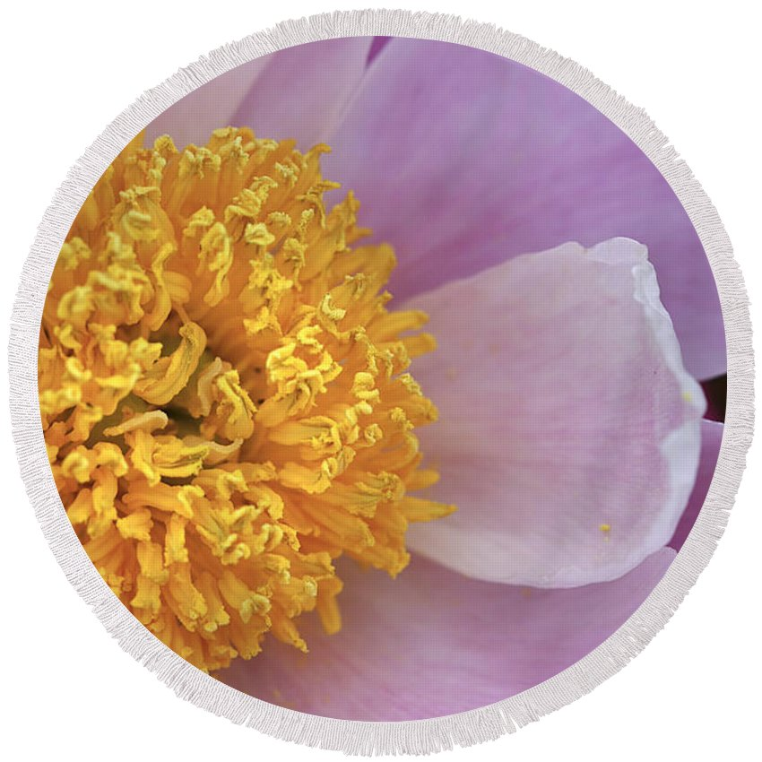 Flower Round Beach Towel featuring the photograph Peonie Yellow Center by Deborah Benoit