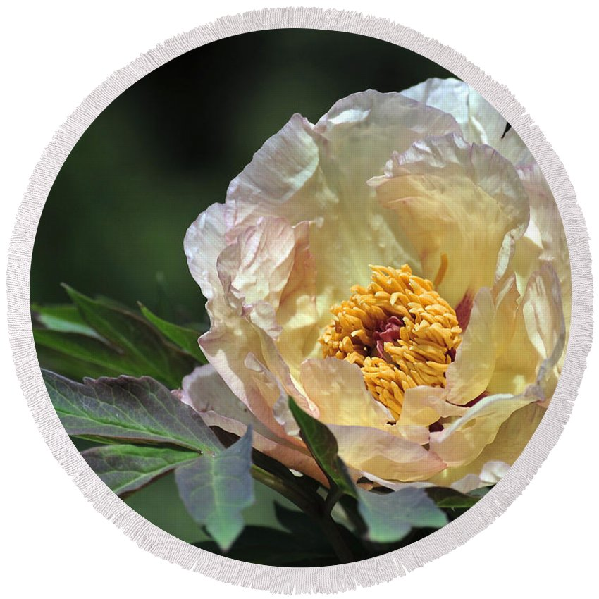 Peonies Round Beach Towel featuring the photograph Peony 18 by Terri Winkler