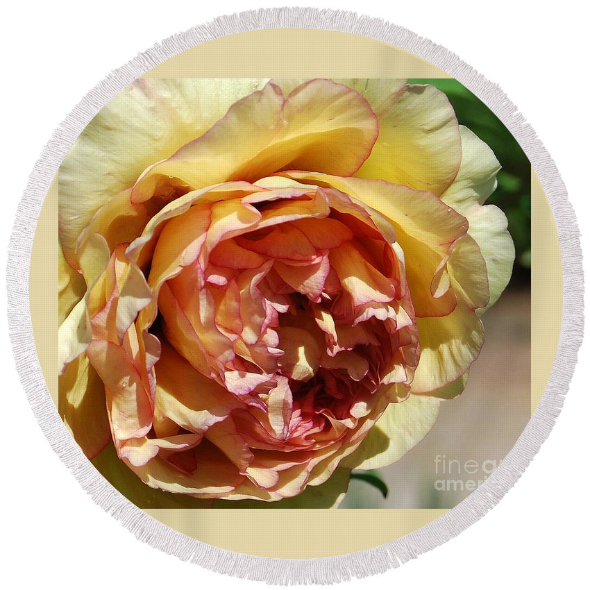 Peonies Round Beach Towel featuring the photograph peony 19 Pale Yellow and Pink Tree Peony macro by Terri Winkler
