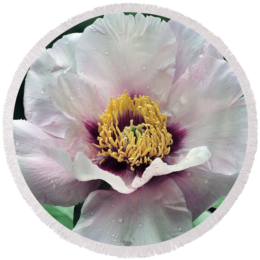 Peonies Round Beach Towel featuring the photograph Peony 21 by Terri Winkler