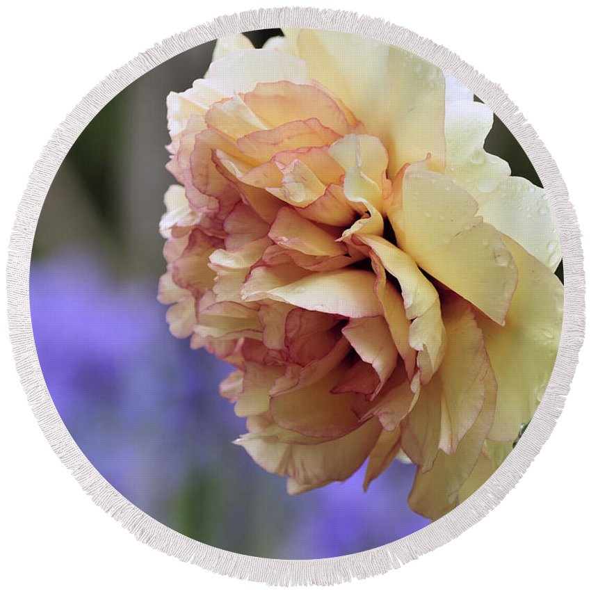 Peonies Round Beach Towel featuring the photograph Peony 24 by Terri Winkler